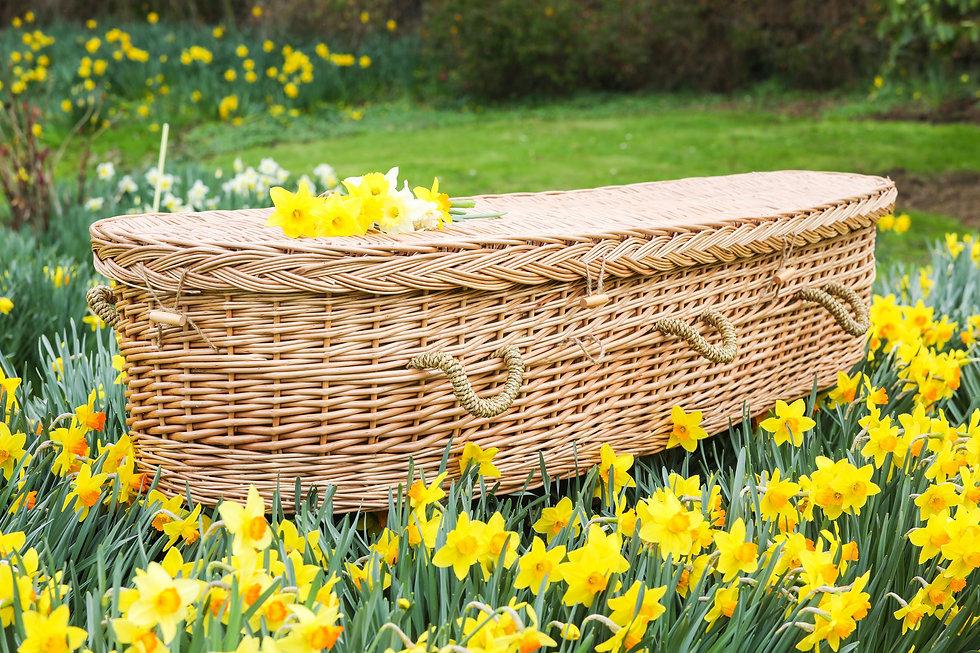 Coffin daffodils side view.jpg
