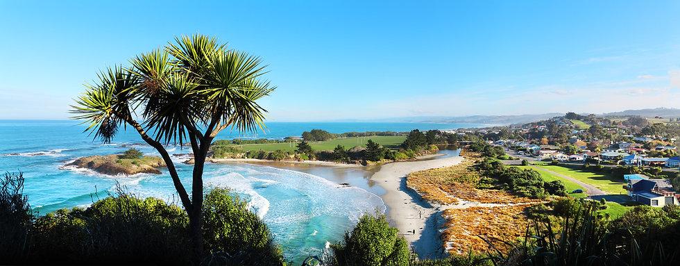 Brighton beach cabbage tree - Dunedin - New Zealand photo ©Starfish Photos | Michele Newman Photographer
