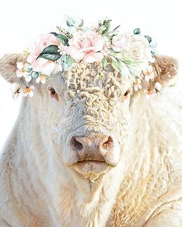 White bull flowers-1.jpg