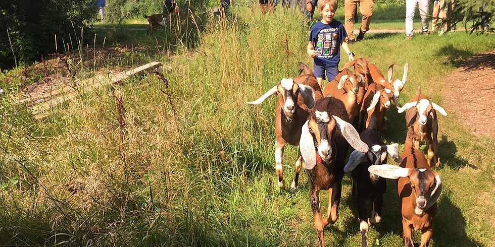 May 24: Herd Hike (4:30 PM)