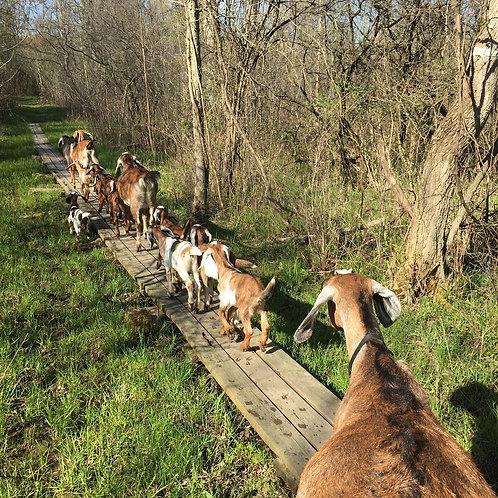 Give a Goat Hike