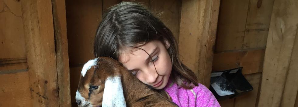 Baby goat cuddling