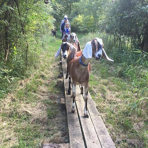 Private Herd Hike