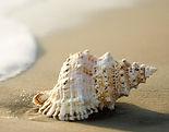 Strand-Muschel-Wissen-Fischspezialitaete