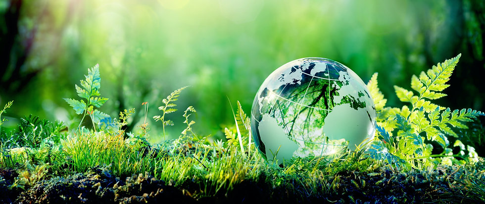 Globe terrestre dans la forêt