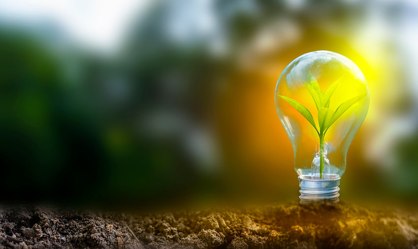 shutterstock_Plante dans ampoule_Licence