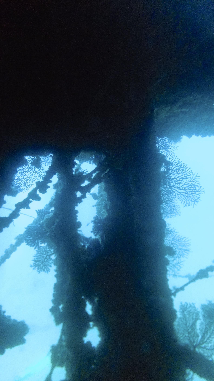 Las Gorgonias