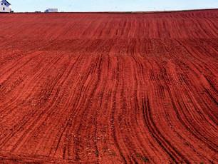 I Forgot Crimson Soil