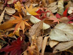 Finally Autumn!