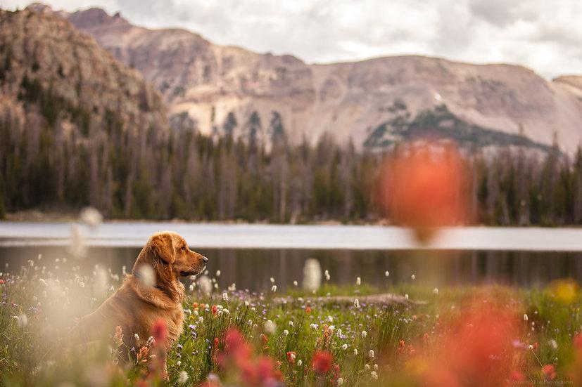 Wild Flowers Wild Dog