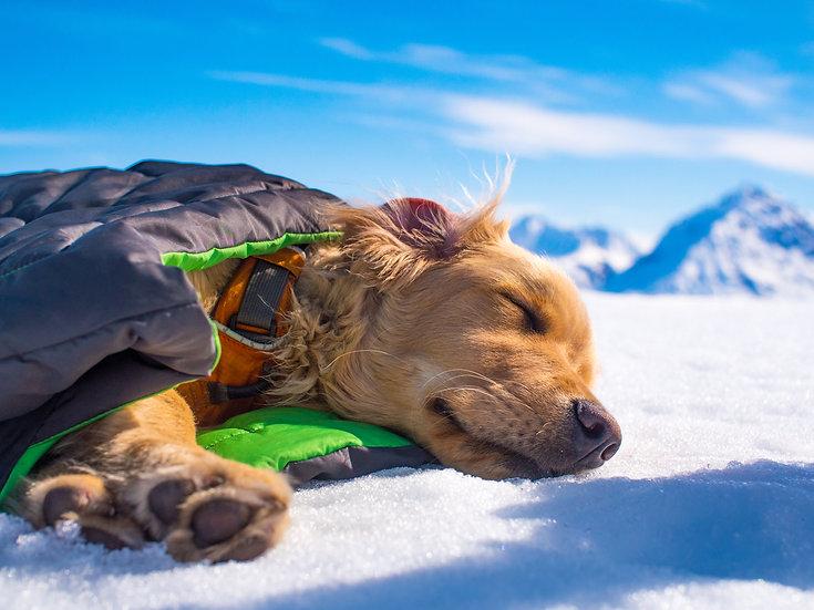 Alaska Nap