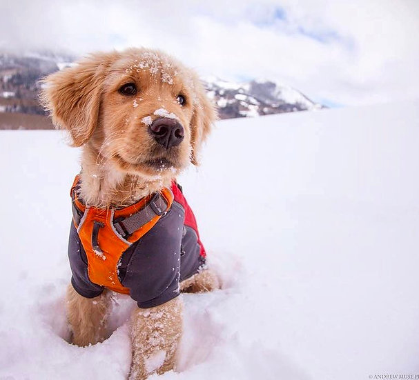 Adventure Pup