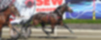 nswsoa-standardbred--owners-association.