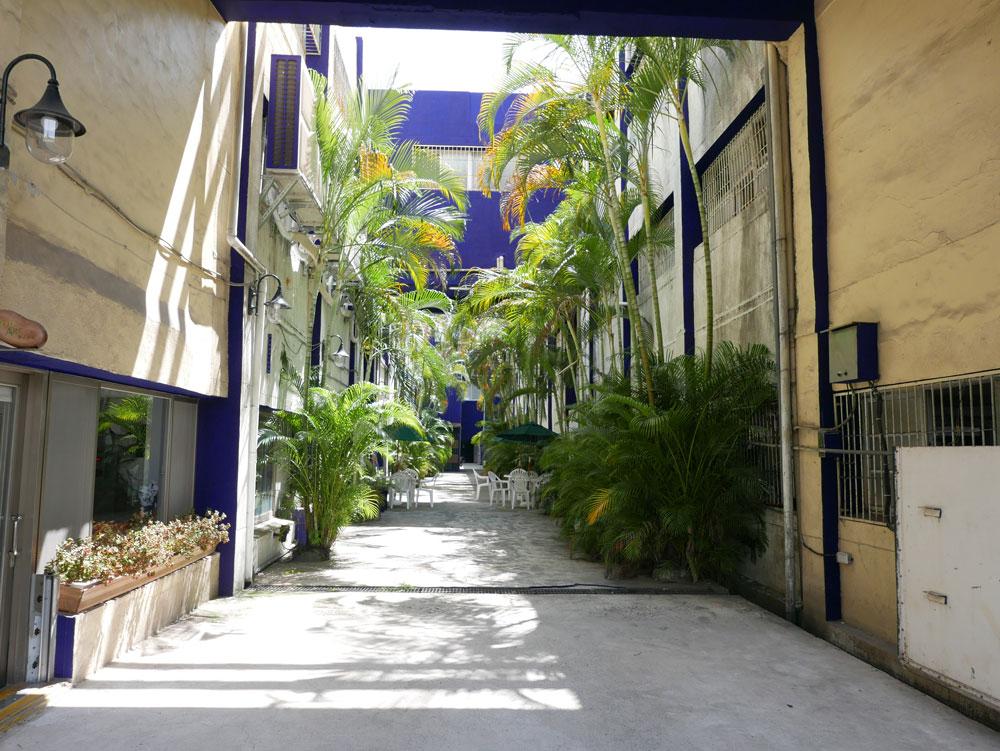 9-1-3_椰林綠廊13