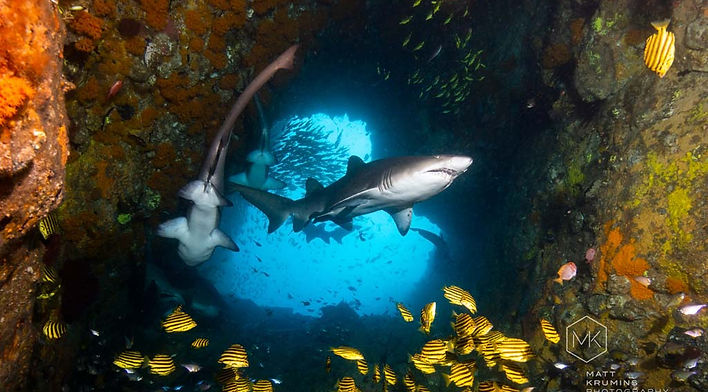 Dive-Fish-Rock-entrance-grey-nurse-shark