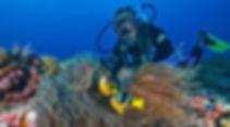 scuba coral.jpg