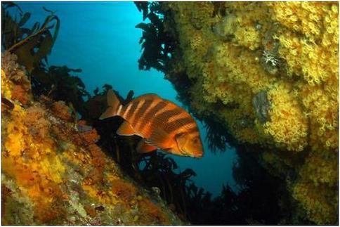 fish_rock.jpg