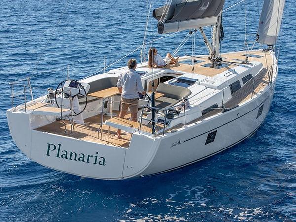 Planaria stern2.jpg