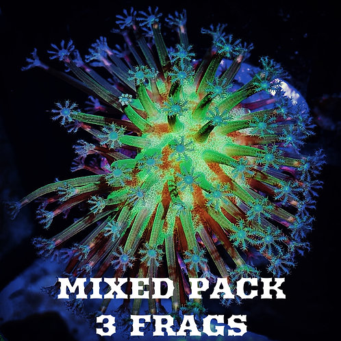 MIXED FRAG PACK