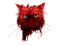 Angry, wet, red cat