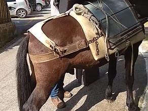 ככה יוצאים מהבית עם תינוק. סוס ומזוודה