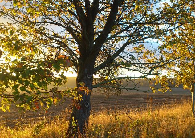 Goldener Herbst.jpg
