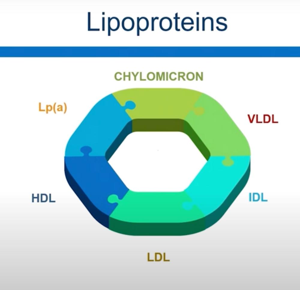 Lipoproteins มี 6 กลุ่ม