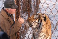 Tiger Traffic