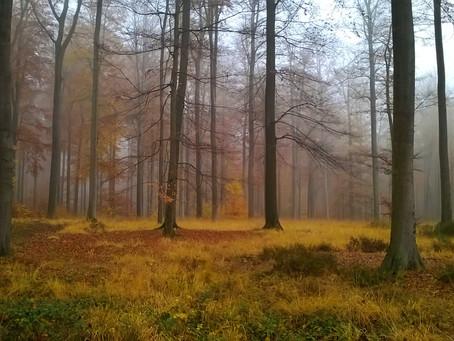 Des « bains de forêts » mais qu'est-ce que c'est ?