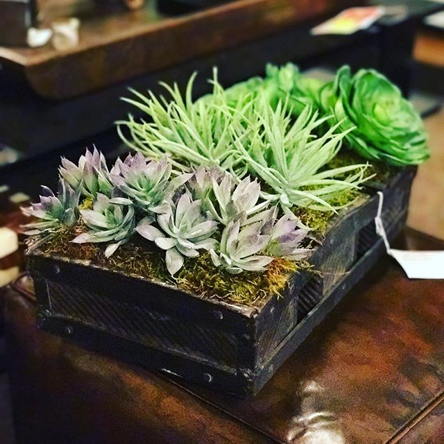 #succulents #interiordesign #columbusoh #ruthwilsonshowroom