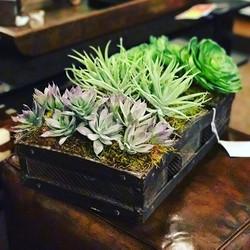 #succulents #interiordesign #columbusoh #ruthwilsonshowroom