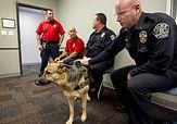 lhs-APD-dog-training-05.jpg