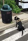 explosivedog.jpg