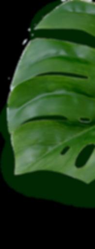 grünes Blatt.png