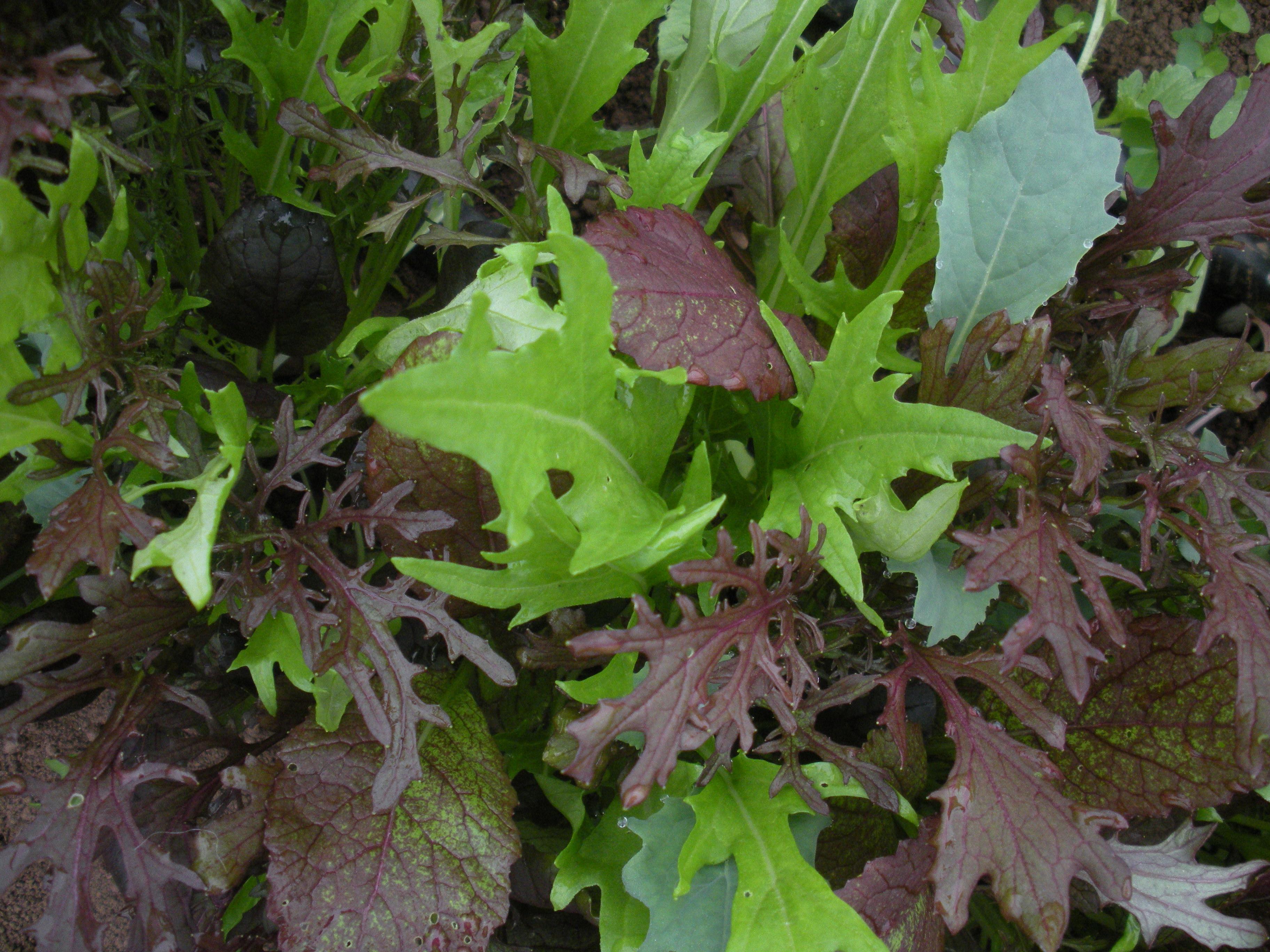 colors in the spring garden.JPG