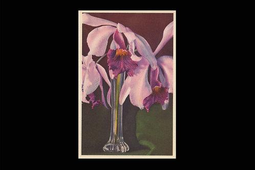 Karte 1051 Orchidee