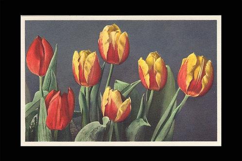 Karte 3163 Tulpen