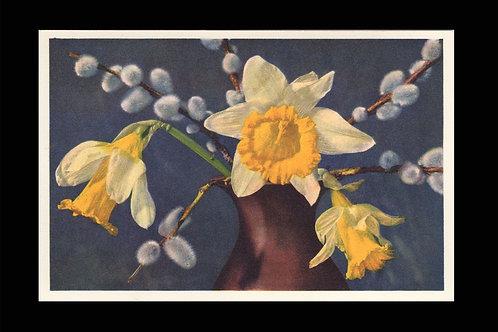 Karte 1173 Weide und gelbe Narcissen