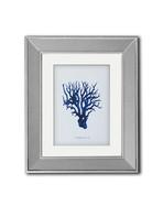 coral azul f.jpg
