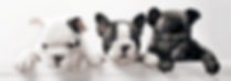 Mobile dog grooming in Croydon
