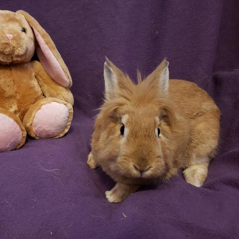 Rabbit de Niro