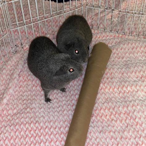 Leela & Amy