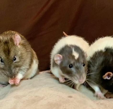 Milo, Marcus & Morris