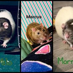 Milo Marcus & Morris
