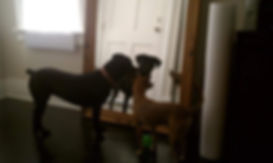 dogs_in_mirror.jpg