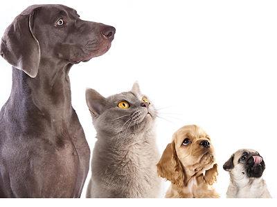 Décoration, personnalisation devanture clinique vétérinaire, cocoon