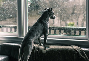 doggie at the window