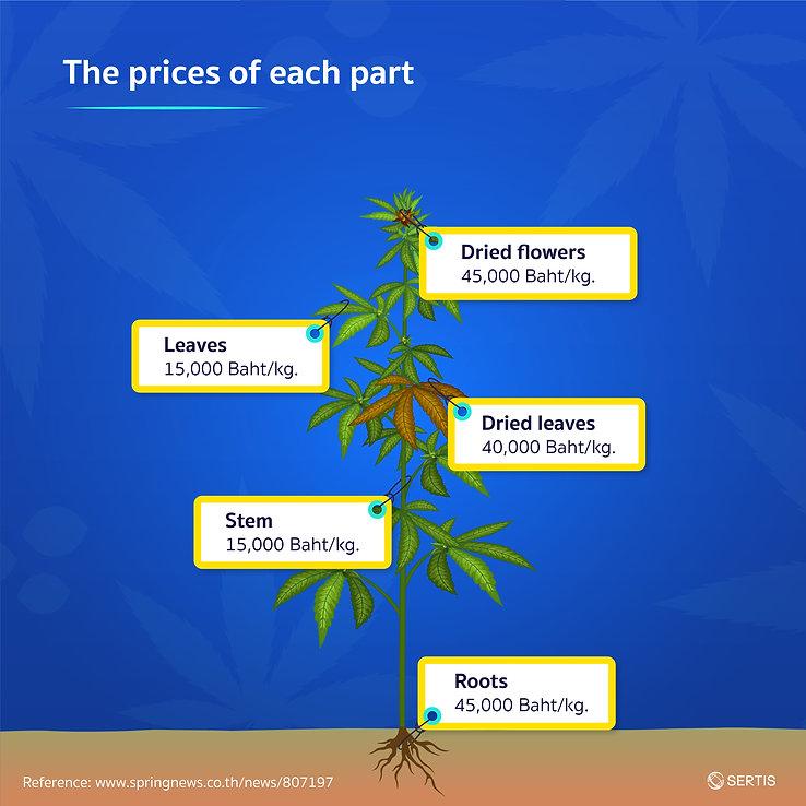 Cannabis-CreativeJUN_Sertis_EN-06.jpg