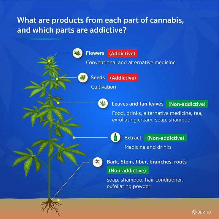 Cannabis-CreativeJUN_Sertis_EN-05.jpg