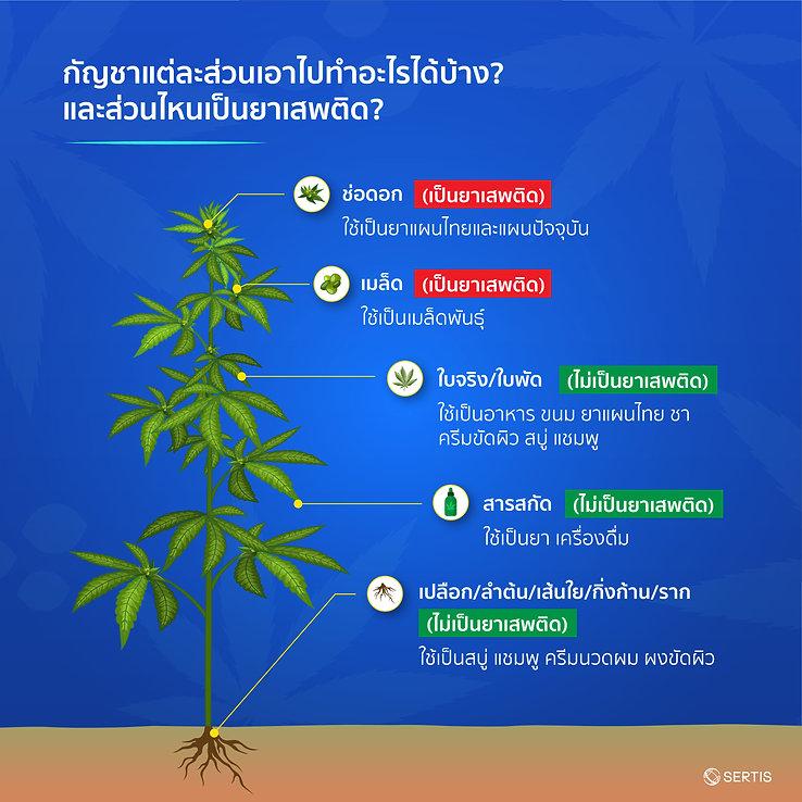 Cannabis-CreativeJUN_Sertis-05.jpg